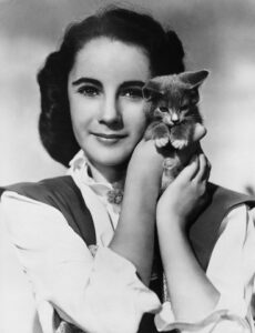 ca. 1940s-1950s --- Elizabeth Taylor Holding Kitten --- Image by © John Springer Collection/CORBIS